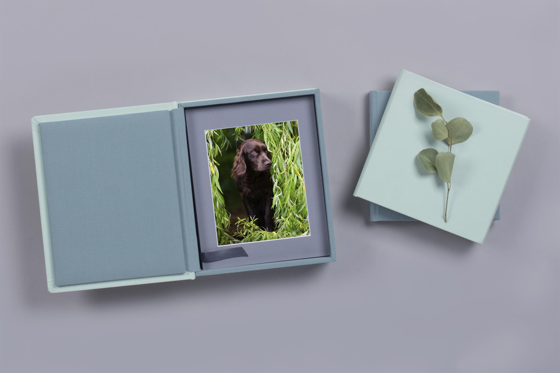 Hundefotografie-bayern-fotobox-hund