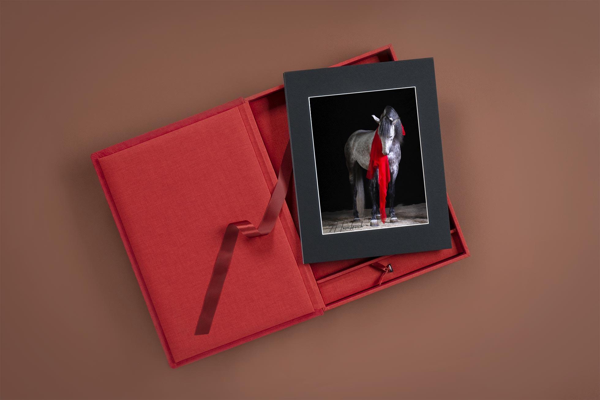Pferdefotografie Bayern Fotobox mit Passepartouts