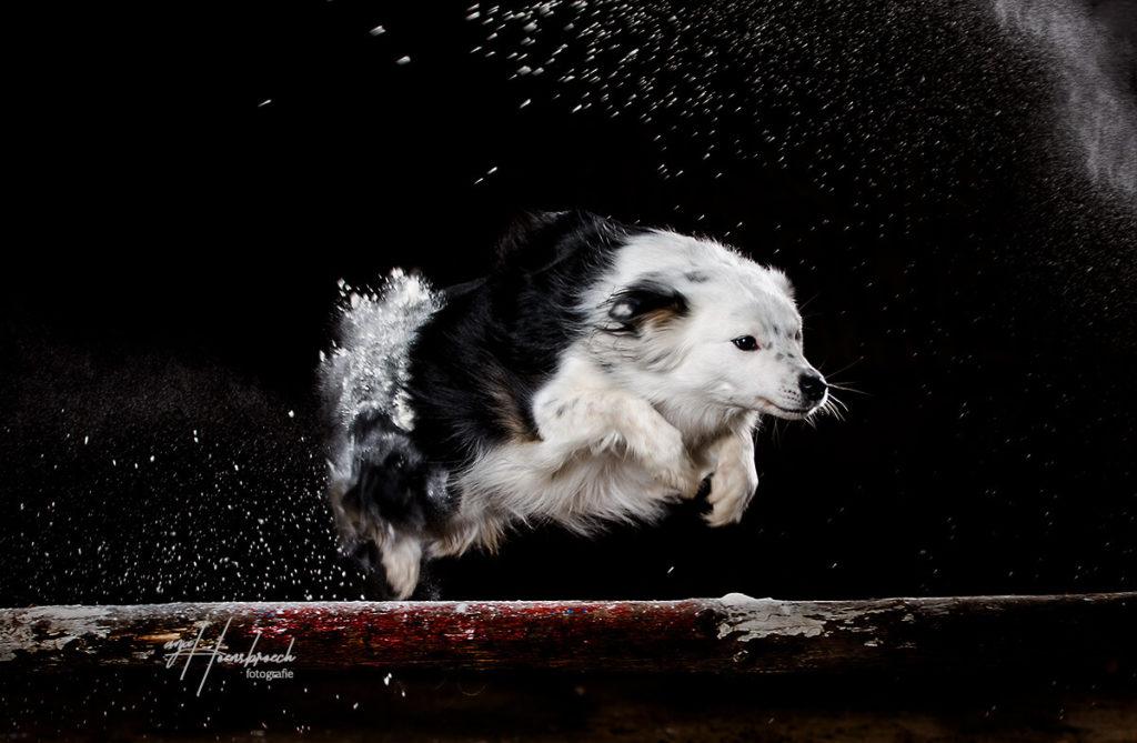 Hundefotografie Bayern Fotostudio Mehlshooting