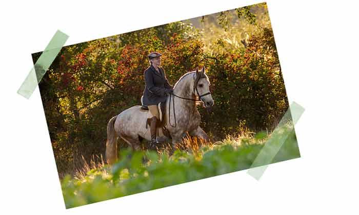 pferdefotografie bayern
